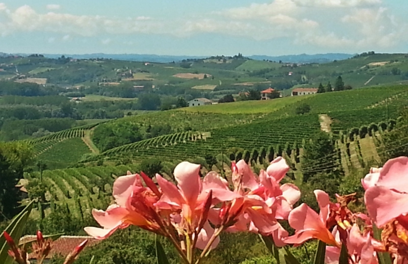 Utsikt fra balkongen, Cascina Castagna, vingård i Piemonte, Nord-Italia