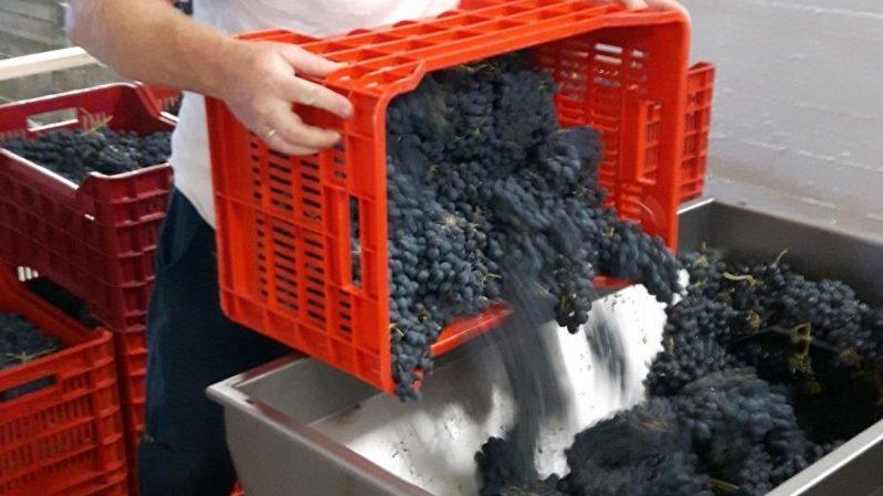 Vinproduksjon, mikrovineri