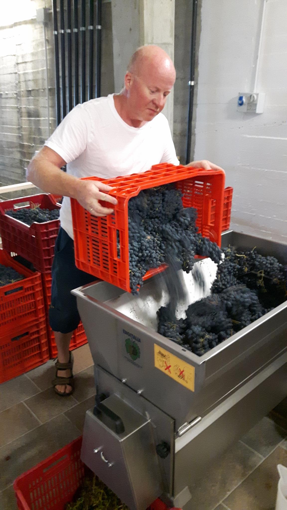 Vinproduksjon på vingård i Piemonte Nord-Italia