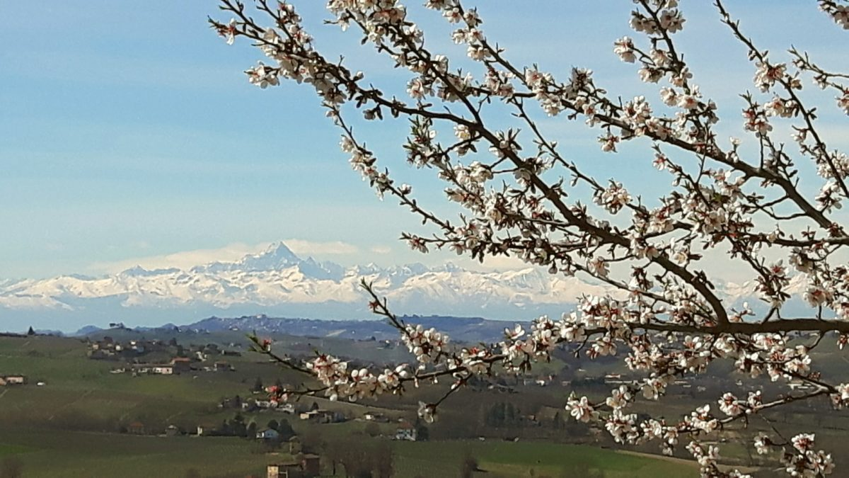 Vårtur i Piemonte