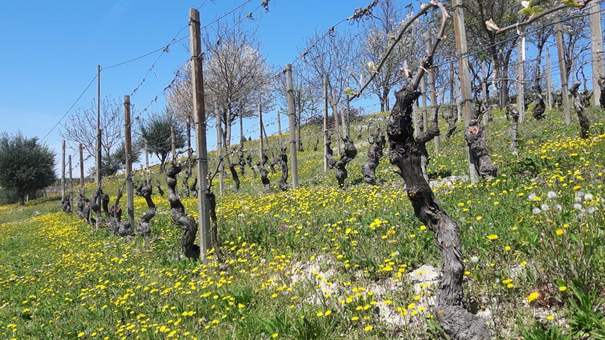 Vårtur vår i vinmarka
