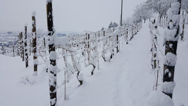 Vinter i vinmarka