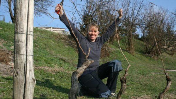 Vinter i vinmarka Piemonte